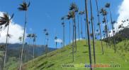 Valle del Cocora – Salento, Quindío