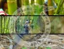 Paraíso del Bambú y la Guadua